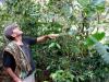 besorgt um seine Ernte: Kaffeebauer in Montero | Peru
