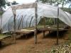 ein Dach schützt Kaffeebohnen vor Regen | Mexiko