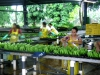 industrielle Bananenverarbeitung | Costa Rica