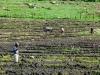 überfluteter Acker in Piura | Peru