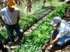 tree nursery for reforestations | Peru