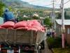 coffee on its way to Europe | Nicaragua
